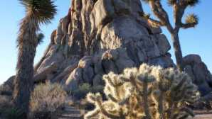 California's New Desert Monuments Field Classes - Joshua Tree Nati