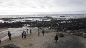 캘리포니아의 놀라운 해안 보존 구역 Friends of Fitzgerald Marine Res