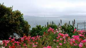 Golden Gate Bridge Gardens of Alcatraz