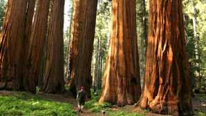 Kings Canyon Scenic Byway Giant Forest Museum | Giant Sequ
