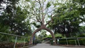 Circus Trees of Gilroy Gardens