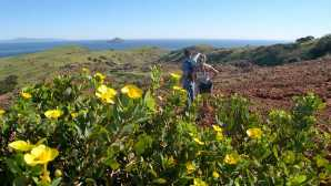 Guided adventures at Channel Islands Hiking Santa Cruz Island - Chann