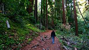 本塔纳旅馆 Hiking in Big Sur - Pfeiffer Fal