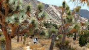 失马矿场 Hiking-Joshua Tree National Park