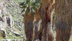 Saguaro Palm Springs INDIAN CANYONS