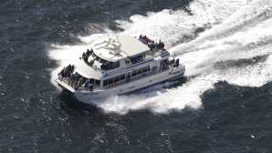 Observer les baleines dans les Channel Islands Island Packers Cruises | Cruisin