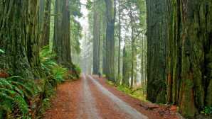 5 einzigartige Highlights in Crescent City Jedediah Smith Redwoods SP