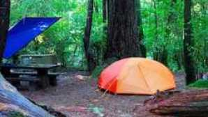 Camping in the Redwoods Jedediah_Smith