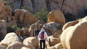 49 棕榈绿洲 Joshua Tree National Park Associ