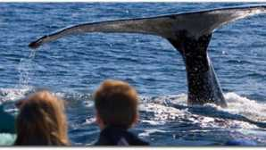 Mendocino Whale Watching & Fishi
