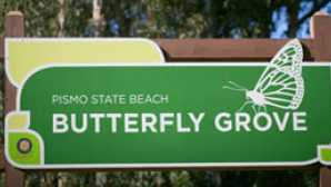 Destaque: San Luis Obispo County Monarch Butterflies of Pismo Bea