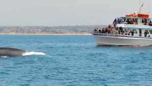 Top Places for Whale Watching in California Newport Beach Whale Watching | N