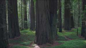 Avenue of the Giants Northern Coast of Northern Calif_0