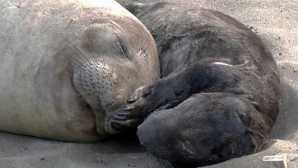 Cambria Piedras Blancas Friends of the E