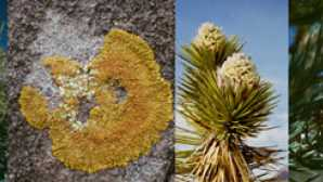 California's New Desert Monuments Plants - Death Valley National P