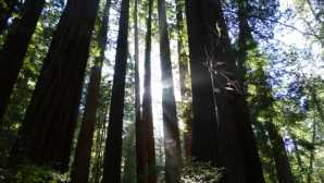 Muir Woods National Monument Ranger's Tips for Experiencing M