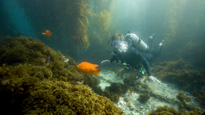 리글리 기념 식물원 SCUBA Diving Catalina Island | V