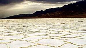Cactus Plants Salt Flats - Death Valley Nation