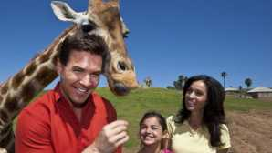 Special Experiences at the San Diego Zoo San Diego Zoo Safari Park |_0
