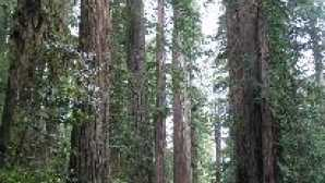 红杉国家公园 Scenic Drives - Redwood National