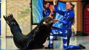 Special Animal Interactions at SeaWorld SeaWorld_San_Diego_Show_Info_0