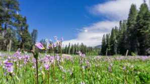 Yosemite Ski and Snowboard Area Sierra-Vista-Scenic-Byway-madera-county-yellow-wildflower-orange-butterfly-liz-christie-photo