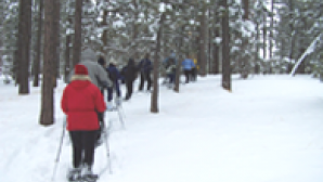 Take a Snowshoe Trek Snowshoe-in-the-Forest
