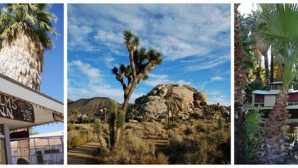 The 29 Palms Inn | Twentynine Pa