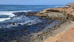 The Rocky Intertidal Zone - Cabr