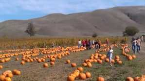 聚焦:纳帕和索诺玛 Tolay Fall Festival | Sonoma Cou