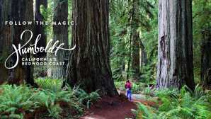Camping in the Redwoods Travel Info for the Redwood Fore