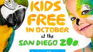 Special Experiences at the San Diego Zoo Video & More | San Diego Zoo