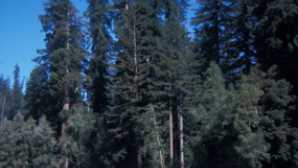 Tall Trees Grove Walks and Hikes - Redwood Nation