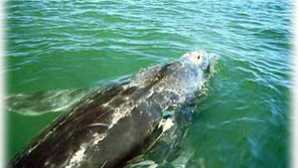 Top Places for Whale Watching in California Whale Watching in Orange County