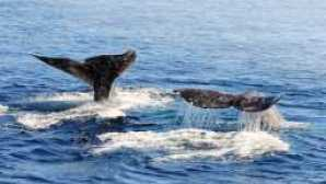 Top Places for Whale Watching in California WhaleWatching HMLanding Cover1800x788