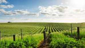 Lodi Wine Country agriculture-rows