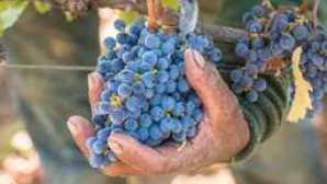 Napa y Sonoma feature_picking_reds