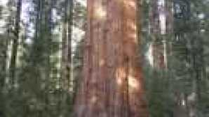 Spotlight: Sequoia & Kings Canyon National Parks general_sherman2-285px-w
