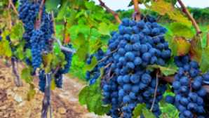 Amazing Wine Country Destinations growers-1