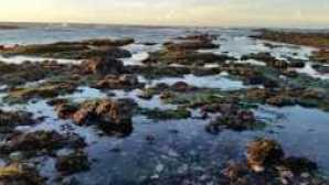 캘리포니아의 놀라운 해안 보존 구역 imgres-2_0