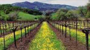 Napa Valley Wines & Wineries imgres-3_0