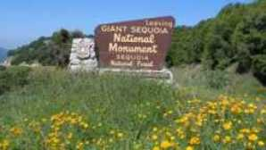 Guided Adventures at Sequoia & Kings Canyon National Parks imgres_4