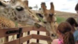 Rugidos e Roncos no San Diego Zoo Safari Park screen_shot_2017-12-21_at_1.59.36_pm