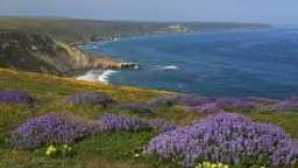 Spotlight: Parc National Des Channel Islands url