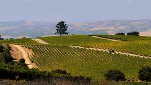 vc_ca101_videothumbnail_fiveamazingthings_santamaria_presquilewinery_1280x7202
