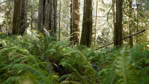 vc_ca101_videothumbnail_nationalparks_redwood_1280x7202