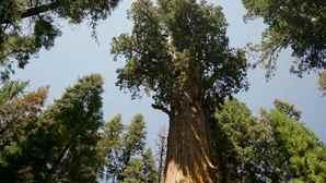 vc_ca101_videothumbnail_nationalparks_sequoiakingscanyon_generalsherman_1280x7202