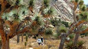 Cabrillo National Monument  vca_resource_JoshuaTree_256x180