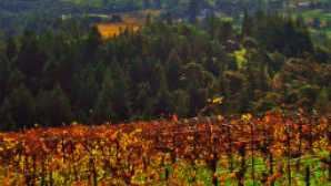 Campovida vca_resource_andersonvalley_256x180