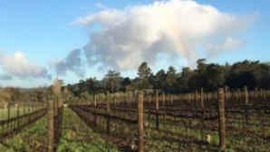 Bernardus Winery